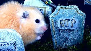 Hamster Halloween Obstacle Course! Huge Candy Haul!