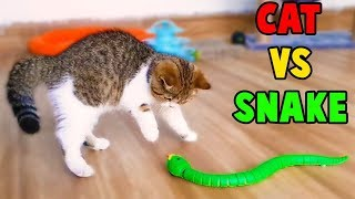 Cutest Cats, So Funny Cats Reaction to Snake Toy, Funny Cats Videos by Animals TV