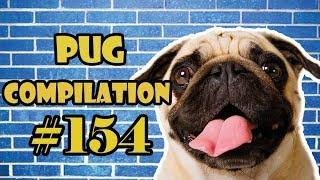 Pug Compilation 154 – Funny Dogs but only Pug Videos | Instapug