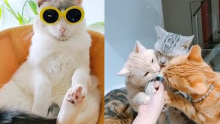 Cute and Funny Cats Videos Compilation Part 9