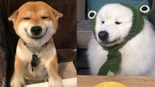 Baby Dogs Funny – Cute And Funny Dog Videos Compilation | Baby Animals – Puppies TV