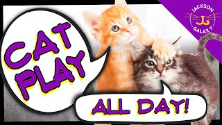 Cute Cat Compilation: Cat Play All Day!