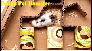 Hamster/My Funny Pet Hamster In The 6 Level Maze Tower/Hamster Finds Way Out Of The Tower