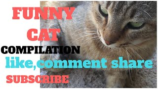 Funny Cat Compilation/Cute and Clever Cat