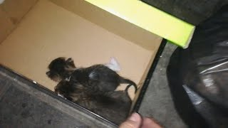 Newborn Kittens Fighting For Life In A Dumpster