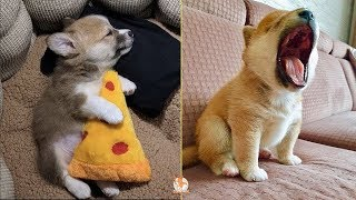 💗 Aww Cute Dogs 😻 Funny Dogs Compilation 2020 – CuteVN Animal