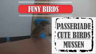 Funy Birds and Cute Birds MUSSEN PASSERIDAE