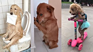 Cute Dogs Funny Videos Try not to laugh 2020