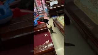 Cats vs Kitten | Funny vs Cute cat