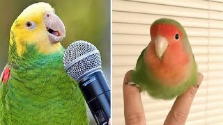 Baby Animals 🔴 Funny Parrots and Cute Birds Compilation (2020) Loros Adorables Recopilación #1