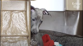 This Puppy's Mom Only Hates Her For An Unexpected Reason | Kritter Klub