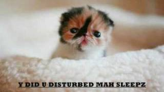 FUNNY CATS LOL!!!    (try not to laugh)