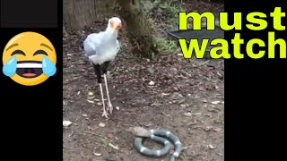 Birds stomping their feet funny compilation