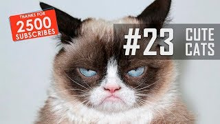 FUNNY CATS COMPILATION | THANKS FOR 2500!!! #23
