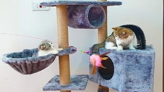 Cutest Cats, So Cute & Happy Cats with new Cat Tree, Funny Cats Videos by Animals TV