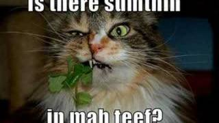 Funny And Cute Cats & Kittens