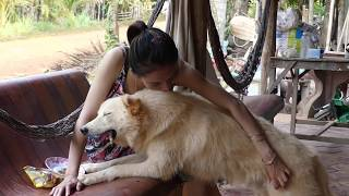 LOVELY SMART GIRL PLAYING BABY CUTE DOGS AT HOME HOW TO PLAY WITH DOG & FEED BABY DOGS #21