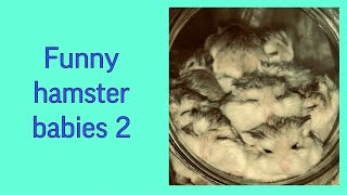 Funny hamster babies part 2