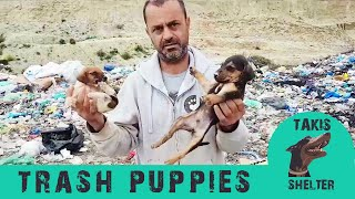 They threw puppies in the landfill to be buried alive – Iggy's rescue – Takis shelter
