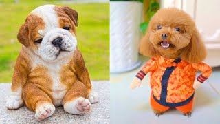 Baby Dogs | Cute and Funny Dog | Videos Compilation | Funny Studio |