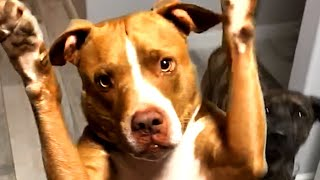 Dogs, Cats and More Animals! Cute and Funny Videos