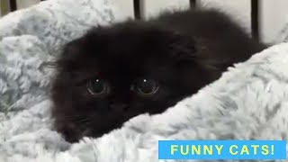 Funny Cat Videos – Cats Being Cats