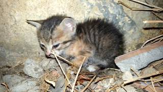 Little kitten crying out loud for mama