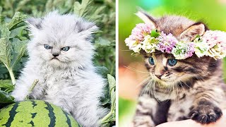 😍 Cute Kittens Doing Funny Things 2020 😍 #5 Cutest Cats