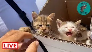 My friends that clean the streets found 3 kittens in the trash  – Takis shelter