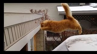 Funny Animals /Funny Videos Of Many Animals Like Funny Cats,Funny Dogs/ Funny Animal Videos 2020