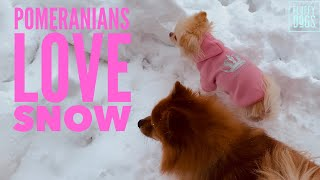 Cute Dogs Playing in the Snow