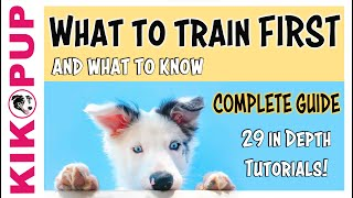 COMPLETE GUIDE to PUPPY TRAINING – What to train FIRST