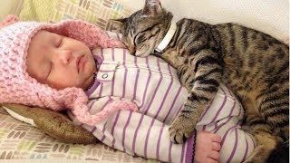 BEST VIDEOS Of Cats Love Babies Compilation || CUTE And FUNNY