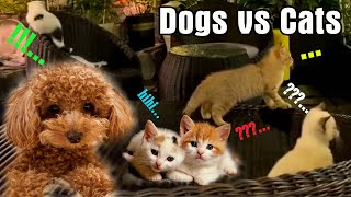 DOGS vs CATS – cute dogs – cute cats – Sala and Susu