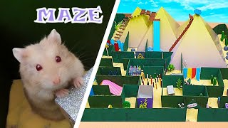 My Hamster Overcome Maze in Pyramid !! Obstacle Course by Life of Pets Hamham