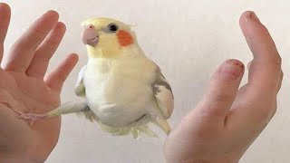 🦜CUTE PARROTS Talking And Funny Birds Compilation 2020 🐦