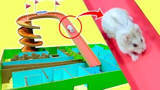 Funny Hamster Discover Spiral maze !! Adventure Hamster with Life of Pets Hamham