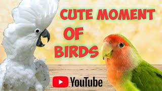 Cute Moment Of Birds 9 | Funny Birds Videos Compilation | Try not to laugh