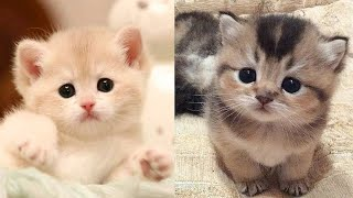 💗Aww – Funny and Cute Dog and Cat Compilation 2020💗 #72 – CuteVN