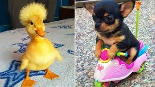 Baby Animals 🔴 Funny Cats and Dogs Videos Compilation (2020) Perros y Gatos Recopilación #29