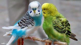 Love birds (cutest)