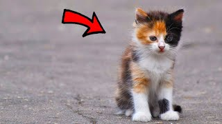 🔴Kittens animals video home funny cat videos plays Live Stream