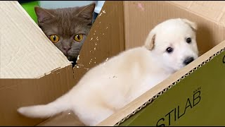 Reaction cats to street puppy in a box