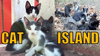 Cute cats. Cat island.