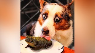 Funny Dogs Videos #1 🐶 Best Of The Funny Animal Videos 🤣 Dogs Story