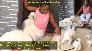 MY Cute Funny Dog Ronaldo fighting his son Aguero as twin brother Messi separate them