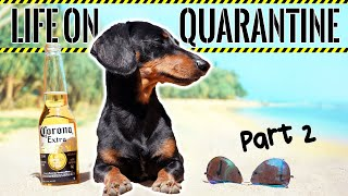 Ep#2: Life on QUARANTINE – PART 2 (Funny Dogs Staying Home!)
