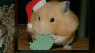 Cute and Funny Hamsters