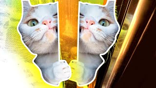 Cute Cats and Funny Cat Videos Compilation