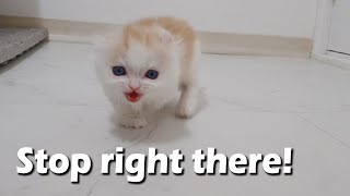 When I Call my Kitten, He Comes to me in Anger